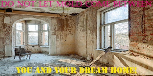 What You Need to Know about Mold when Buying or Selling a House