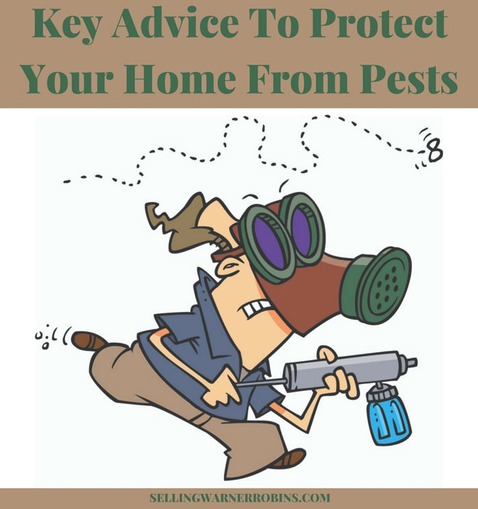 Key Advice To Protect Your Home From Pests