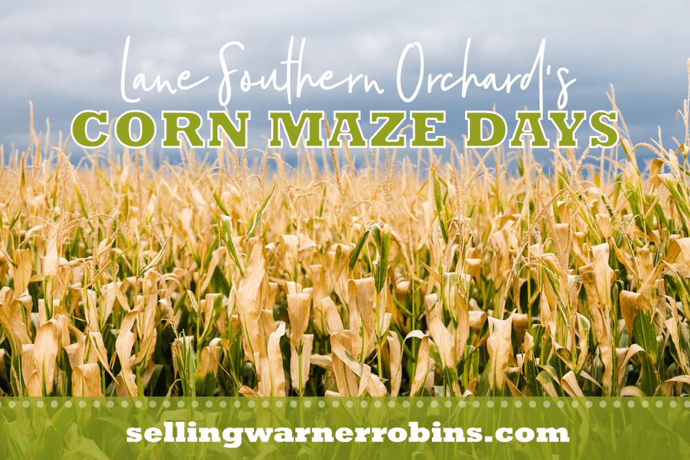 Corn Maze Days at Lane Southern Orchards